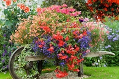 03-front-yard-landscaping-garden-ideas-homebnc