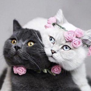 кошки красота