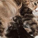 роды котят помощь кошке